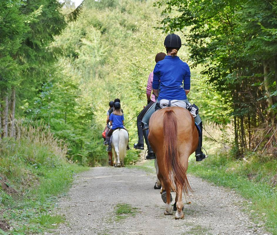 Discover equestrian tourism in Colombia Movich Hotels